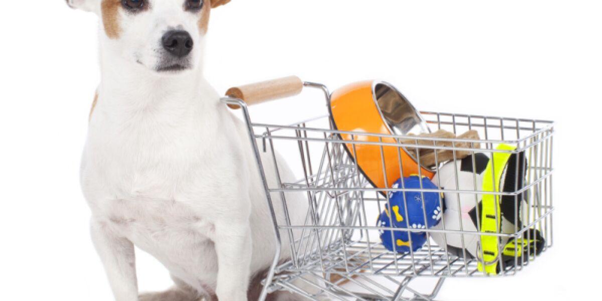 Ein Hund sitzt neben einem Einkaufswagen