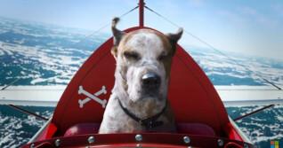 Hunde im Flugsimulator Microsoft