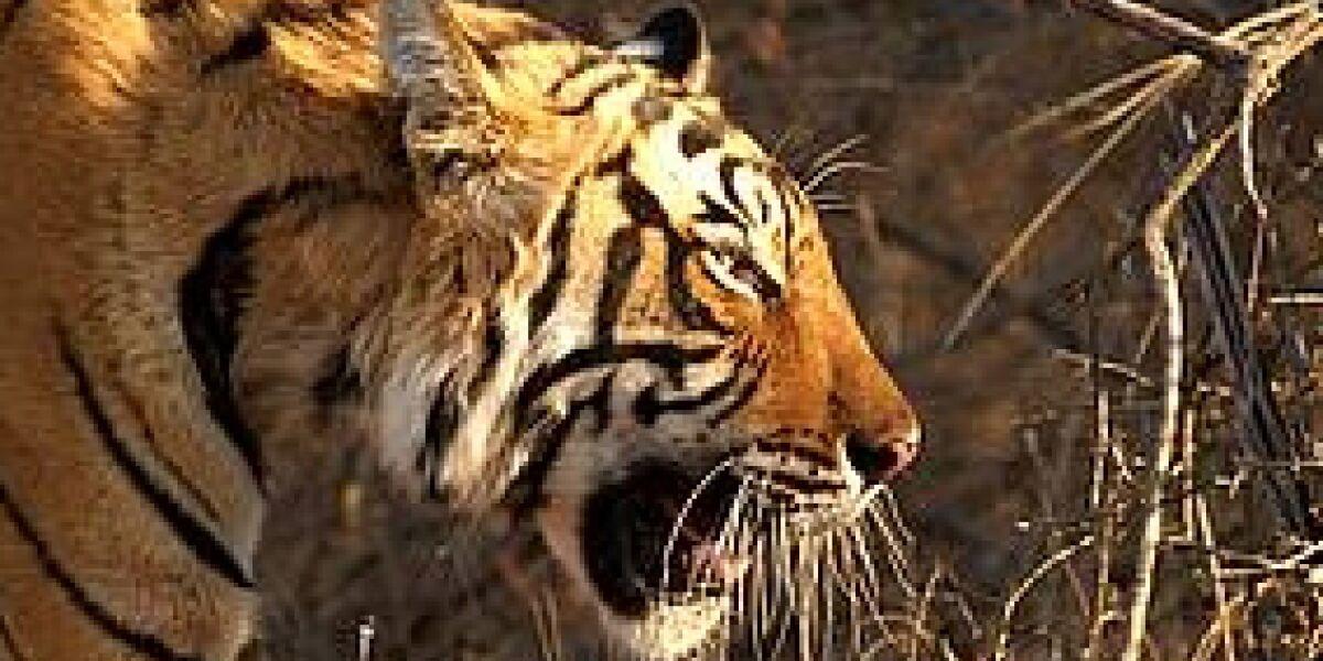 gelee royale realisiert crossmediale Kampagne für den WWF (Foto: WWF)