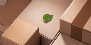 Grünes Blatt zwischen Pappschachteln