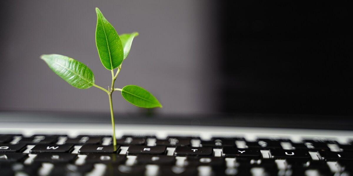 Laptop-Tastatur mit Pflanze, die darauf wächst