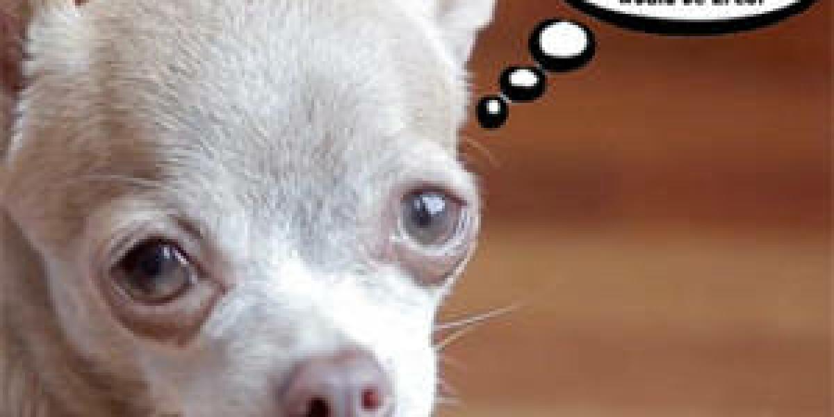 Virtueller Hunde-Babysitter Petziconnect
