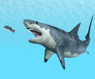 Hai frisst kleinen Fisch