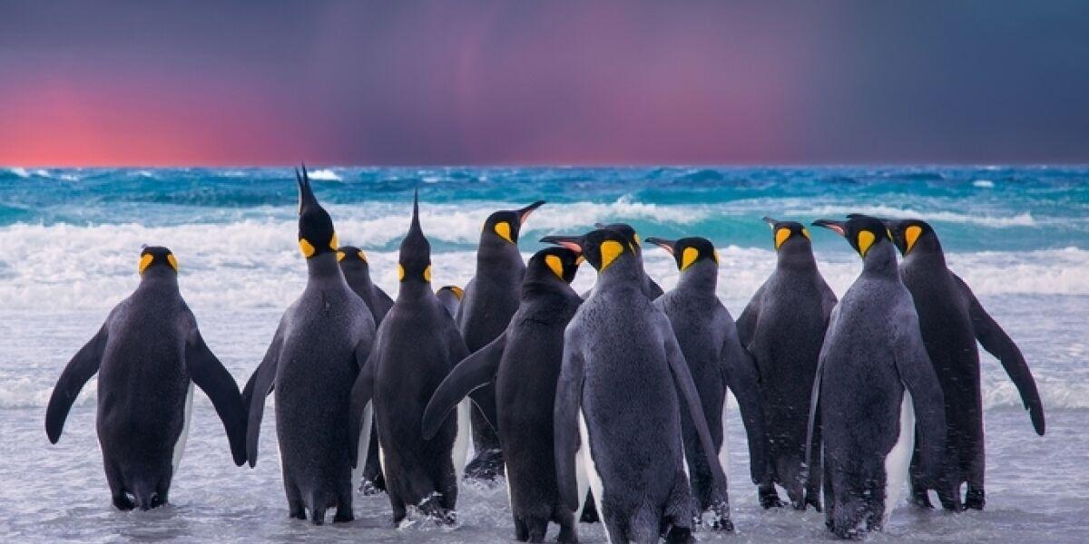 Pinguine Social Freezing Eis