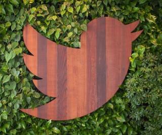 Twitter-Vogel vor einer Hecke
