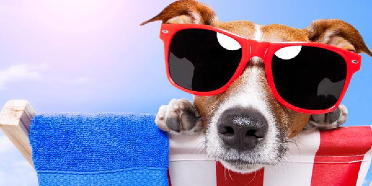 Hund mit Sonnenbrille liegt auf einer Liege am Strand