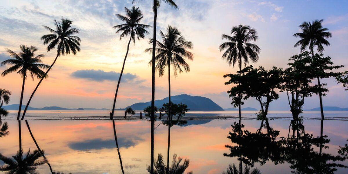 Palmen Insel Meer Strand