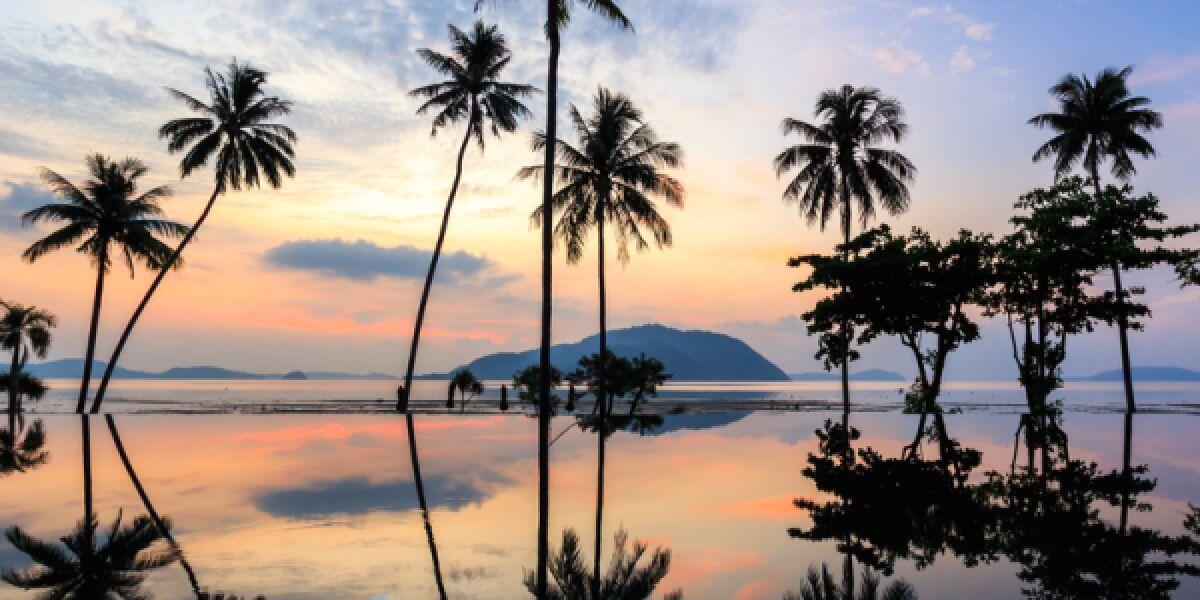 Palmenstand im Sonnenuntergang