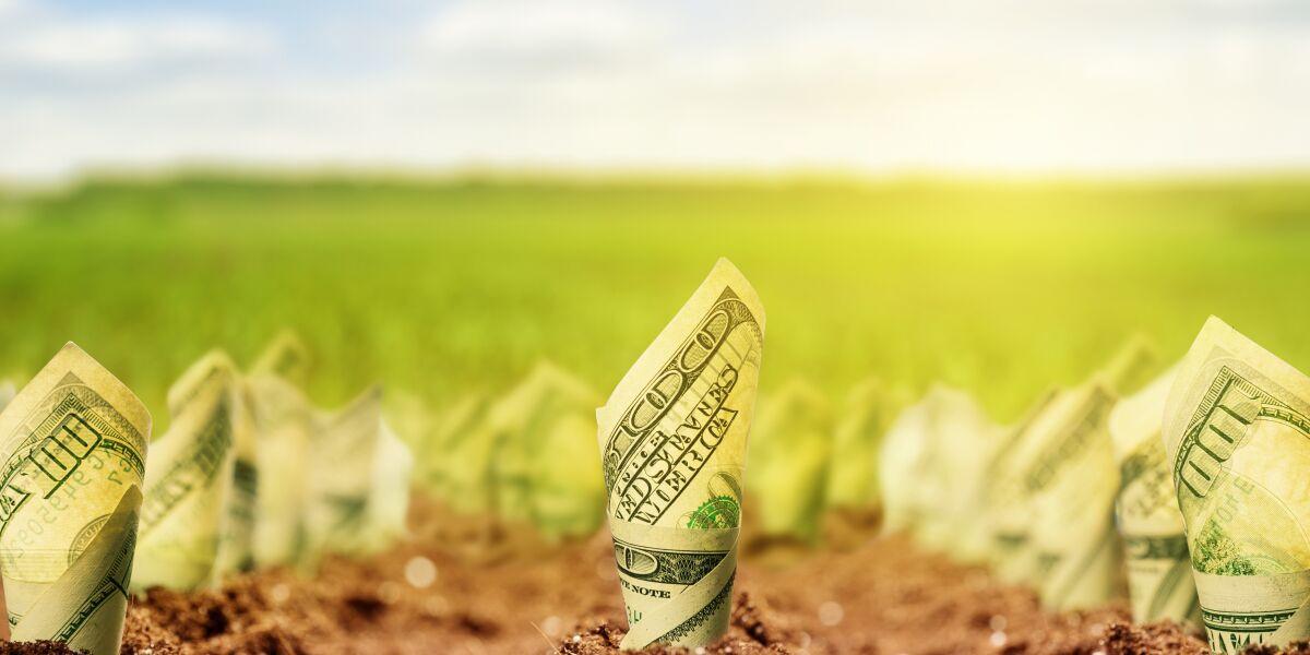 Geld in Erde