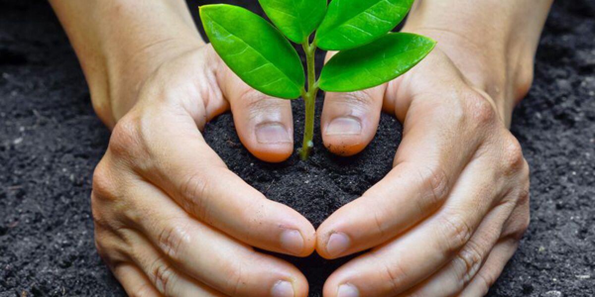 Hände planzen einen Baum