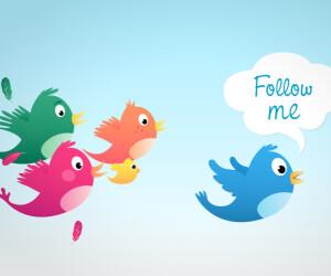 Vögel mit Follow me