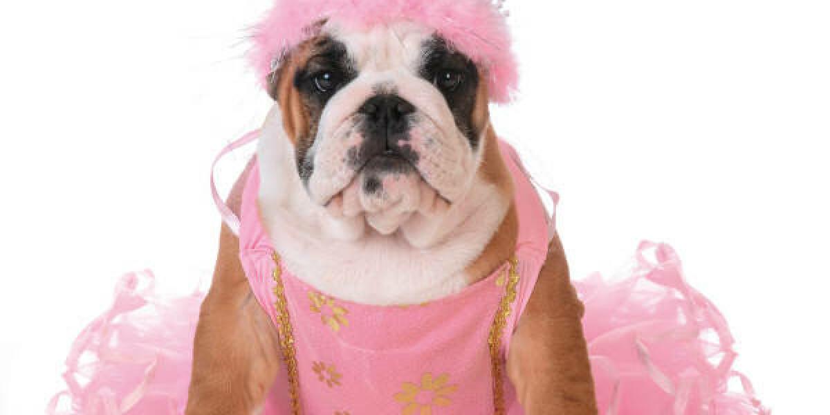 Hund trägt ein Prinzessin-Kostüm