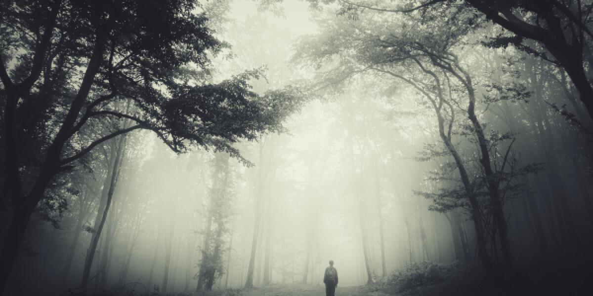 Dunkler und düsterer Wald