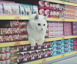 Katze im Regal