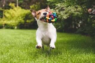 Süßer Hund mit Ball