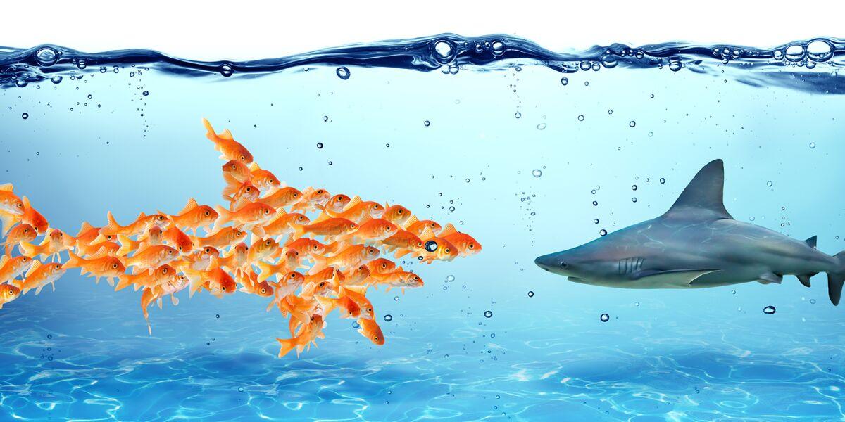 Hai und Fische im Wasser